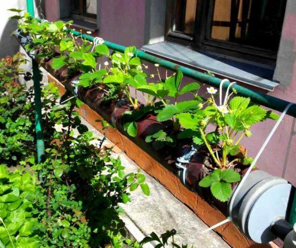 Труд и огород