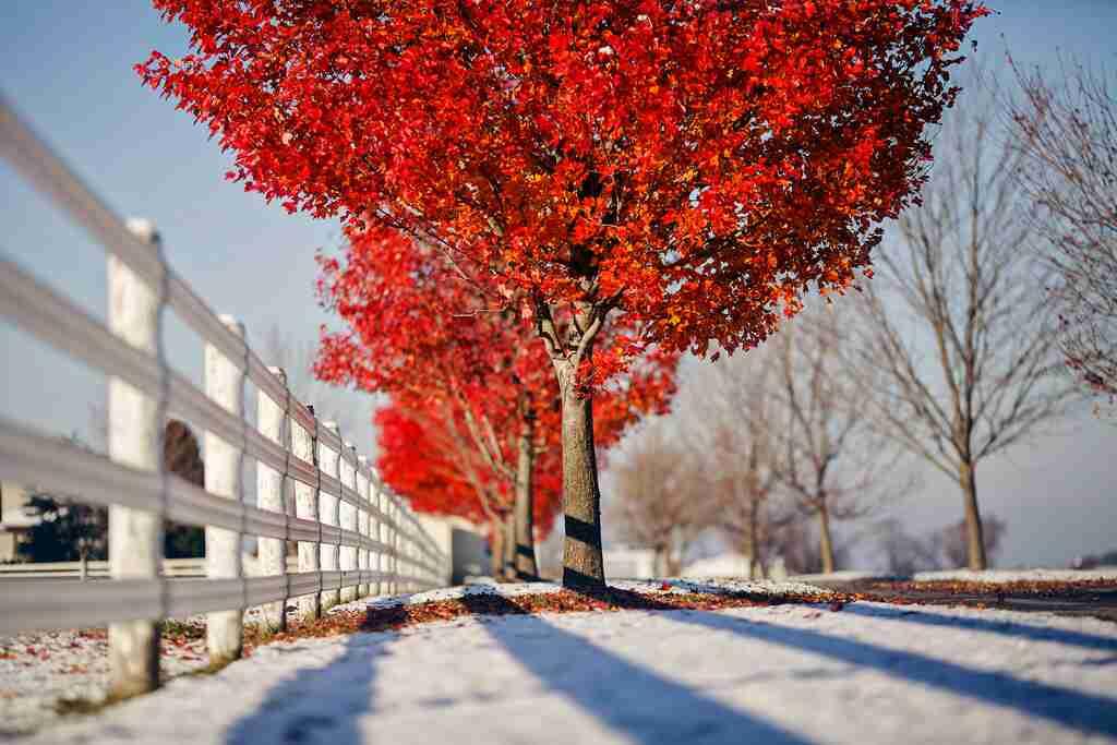 На каком расстоянии от забора 🎍 можно сажать деревья и кустарники{q}