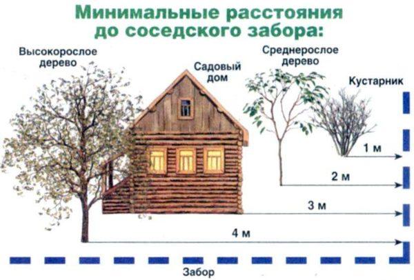 Схема расстояний между деревьями