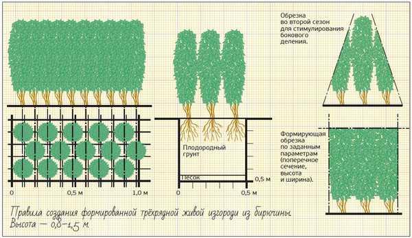 Требования к растениям