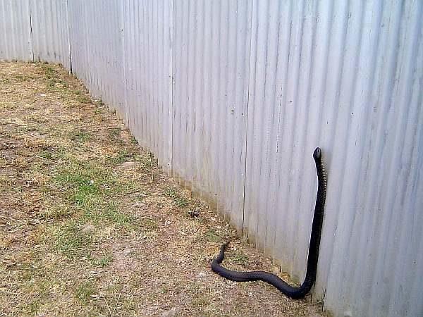 Профлист и змея