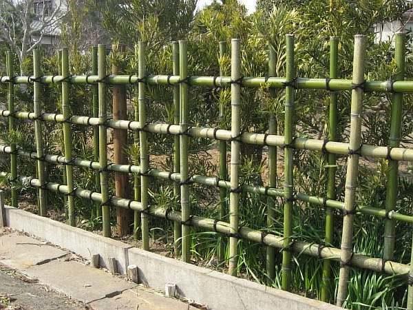 Бамбук и ветки