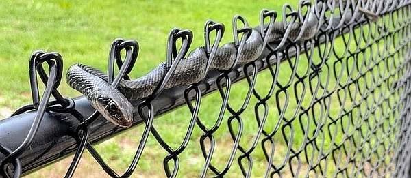 Забор от змей на дачном участке