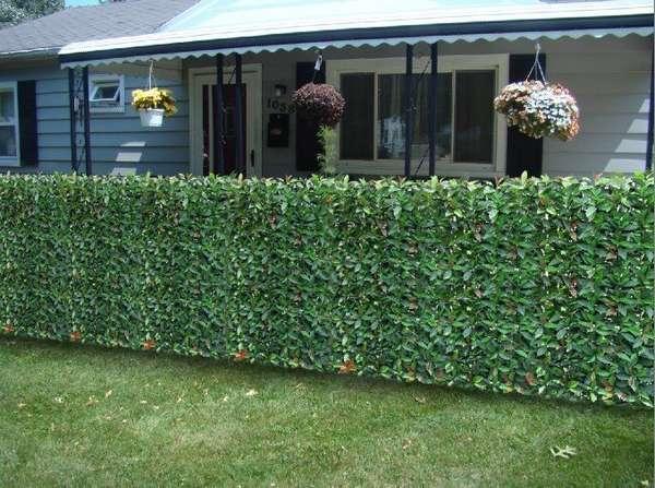 Ограда из растений